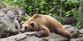 bears_uitgeput_short_posities_nemen_af_long_posities_stijgen_op_Bitcoin_futures_markt