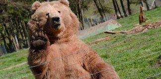 gerenommeerd_crypto_analist_willy_woo_bitcoin_bear_markt