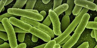 voorspellen_bacterien_een_rooskleurige_toekomst_voor_bitcoin