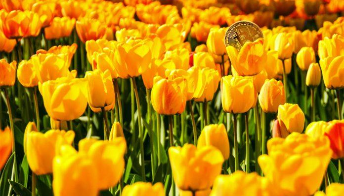 nederland_op_tweede_plek_in_top_5_google_trends_voor_zoekterm_bitcoin