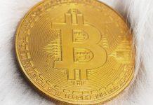 bitcoin_BTC_bereikt_hoogste_punt_in_13_maanden_10000_dollar_is_in_zicht