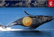 Bitcoin (BTC) whales versturen meer dan €1,5 miljard aan BTC