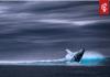 Bekende bitcoin whale op Bitfinex voorspelt flinke correctie, en wel hierom