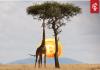 """Twitter CEO Jack Dorsey: """"Afrika zal de toekomst van bitcoin (BTC) bepalen!"""""""