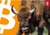 wekelijkse_bitcoin_BTC_koers_analyse_david_van_ineveld_de_stier_komt_terug