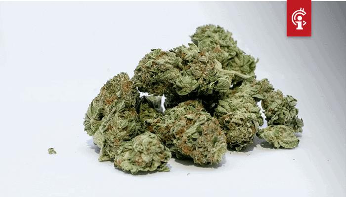 TruTrace zet wiet op de blockchain om herkomst te garanderen en cannabissoorten vast te leggen
