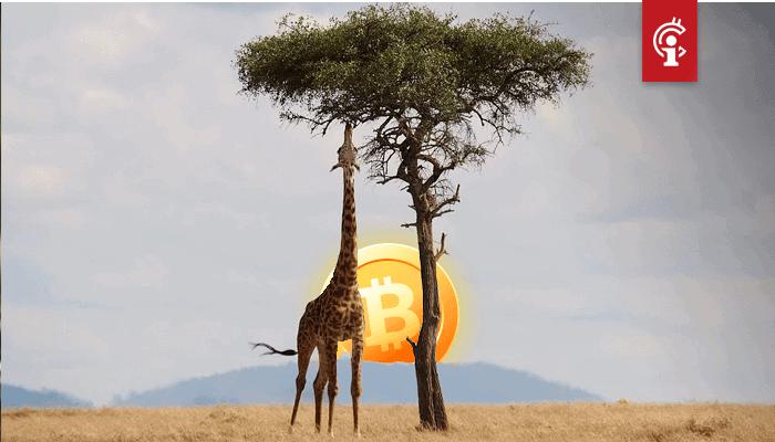 Bitcoin (BTC) peer-to-peer handelsvolume in Afrika bereikt record in aanloop naar halving