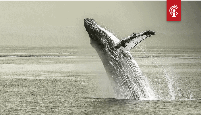 Bitcoin (BTC) whale die vlak voor vorige dalingen verscheen, duikt weer op