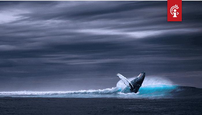 3 altcoins die het meest werden opgekocht door whales zien enorme stijgingen