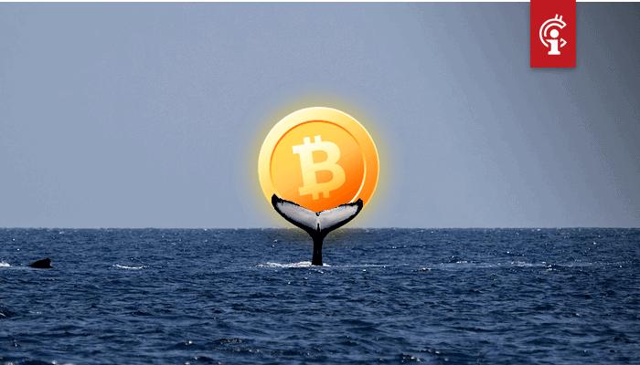 Bitcoin whales verplaatsen $2,27 miljard aan BTC, aantal whales neemt met 2% toe sinds halving