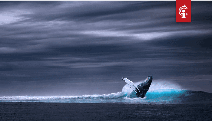 Bitcoin (BTC) whale Joe007 over DeFi: 'Het is ponzifraude'