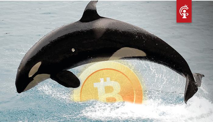 Bitcoin (BTC) whales nemen voor het eerst sinds 2016 in aantallen toe, maar ze worden niet rijker