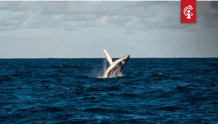 Bitcoin (BTC) whale Joe007 is plotseling positief over deze twee altcoins