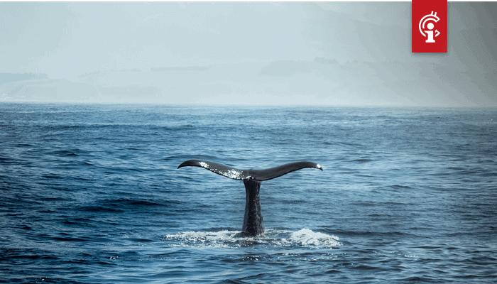 Bitcoin whale verplaatst maar liefst 60.000 BTC ter waarde van $624 miljoen