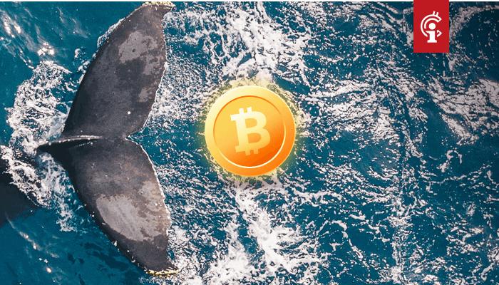 Aantal bitcoin whales staat het hoogst in 4 jaar terwijl BTC op exchanges blijft afnemen