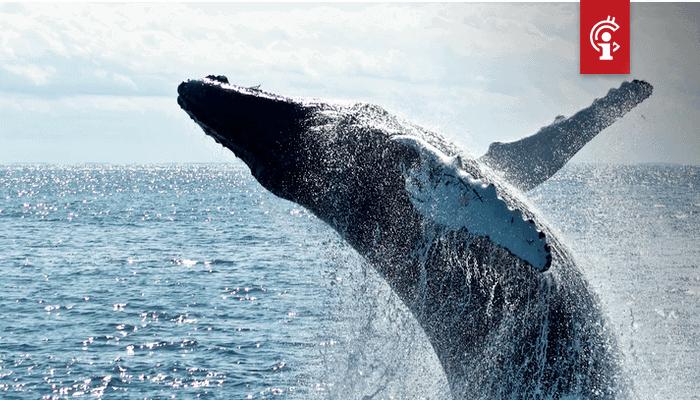 Bitcoin (BTC) whale dumping gaat niet gebeuren, blijkt uit deze gegevens