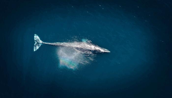 Bitcoin (BTC) whales blijven massaal inkopen, duidt dat op een koersstijging of is een correctie waarschijnlijker