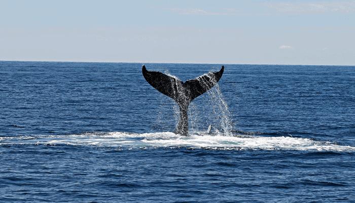 Aantal XRP whales neemt sterk af, Ripple medeoprichter Jed McCaleb verkocht meer dan $400 miljoen XRP