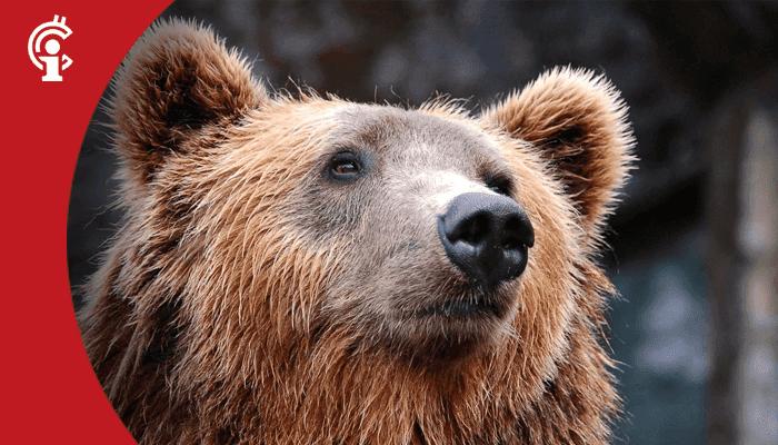 Update 07-04-21: Kijk uit voor de beer!