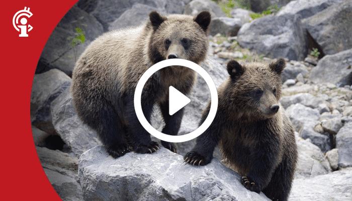 Marktupdate 23-07-21: Kleine bearish signalen voor de bitcoin koers? Let op deze niveaus!